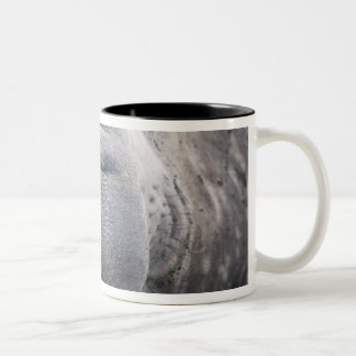 Southern Elephant Seal Mirounga leonina) 2 Two-Tone Mug