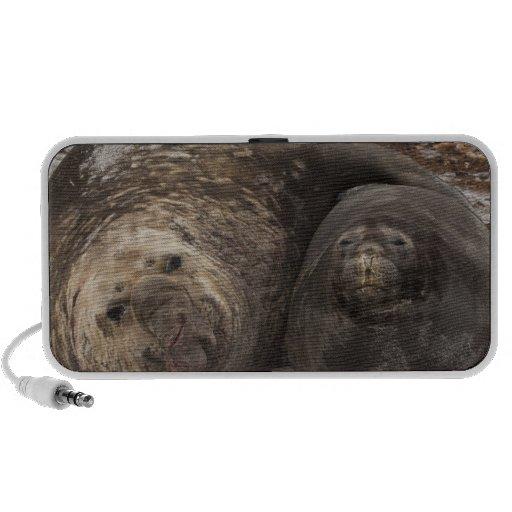 Southern Elephant Seals Mirounga leonina) iPhone Speaker