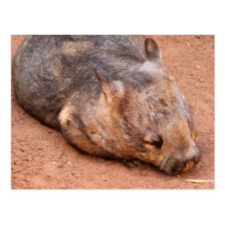 Southern Hairy-Nosed Wombat Postcard