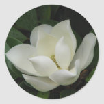 Southern Magnolia Bloom Round Stickers