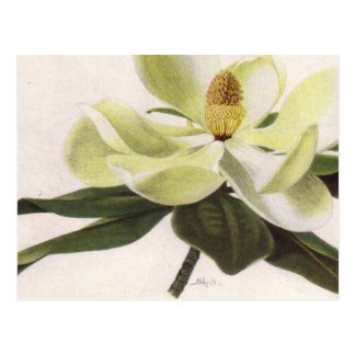 Southern Magnolia Greeting Card