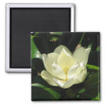 Southern Magnolia Magnets