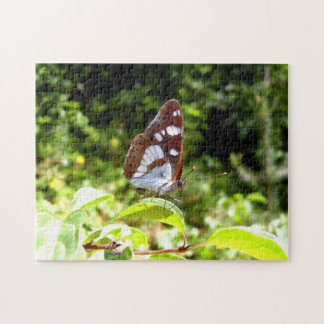 Southern White Admiral Butterfly Photo Puzzle