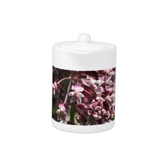 Southern Wormwood (Artemisia abrotanum)