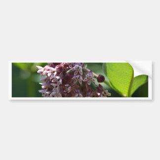 Southern Wormwood (Artemisia abrotanum) Bumper Sticker