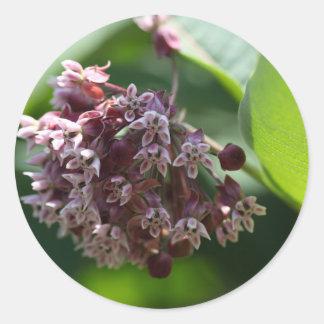 Southern Wormwood (Artemisia abrotanum) Classic Round Sticker