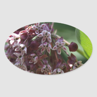 Southern Wormwood (Artemisia abrotanum) Oval Sticker