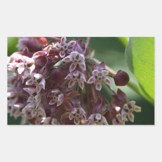 Southern Wormwood (Artemisia abrotanum) Rectangular Sticker