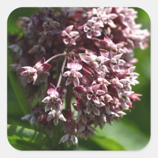 Southern Wormwood (Artemisia abrotanum) Square Sticker