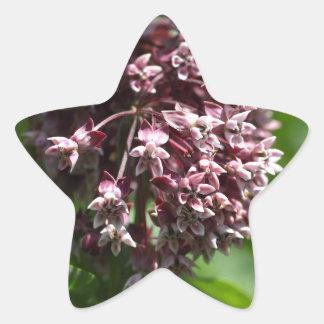 Southern Wormwood (Artemisia abrotanum) Star Sticker