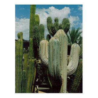 Southwest Cactus Postcard
