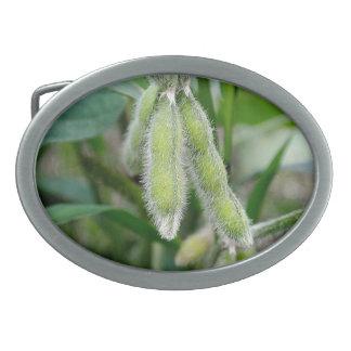 Soybean Belt Buckle