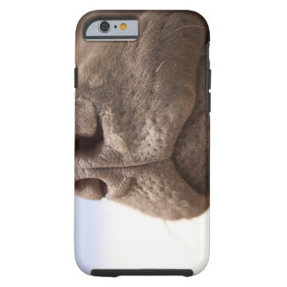 Spain, Costa Blanca, Close-up of chocolate Tough iPhone 6 Case