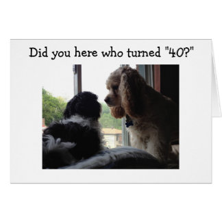 SPANIEL AND HAVANESE HEAR WHO TURNED *40* CARD