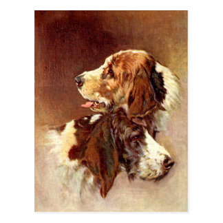 Spaniel Dogs Vintage Art Design Postcard