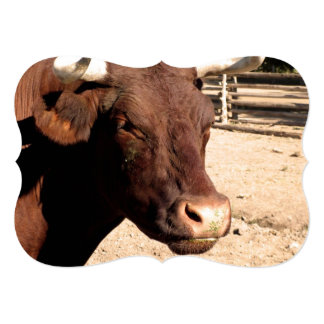 Spanish Bull 13 Cm X 18 Cm Invitation Card