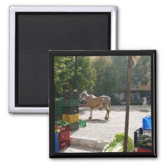 Spanish donkey at Baza market -  magnet