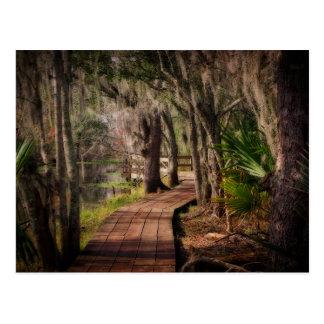 Spanish Moss and Louisiana Swamps Postcard