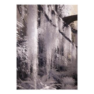 Spanish Moss/Infrared Photography Invite