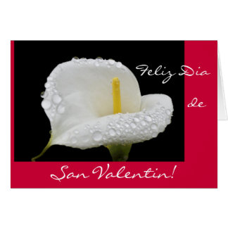 Spanish: Valentine's Day / San Valentin Card