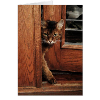Sparkle in the Doorway Somali Cat Card
