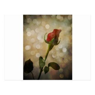 Sparkling Red Rose Bud Photograph Art Postcard