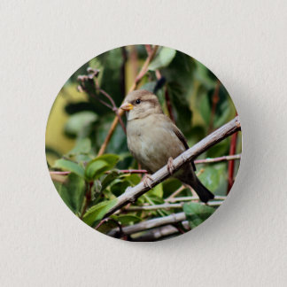 Sparrow 6 Cm Round Badge