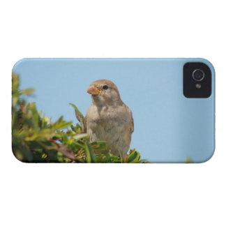 sparrow against blue sky iPhone 4 cover