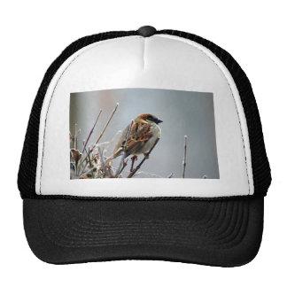 sparrow-bird-animal-nature cap