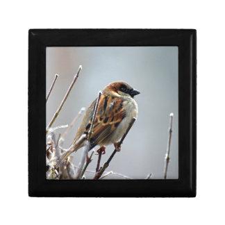 sparrow-bird-animal-nature small square gift box