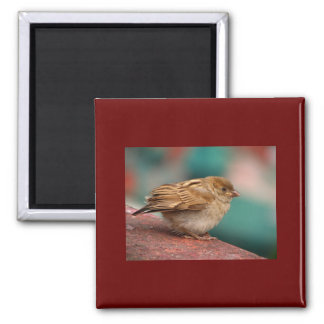 Sparrow Bird Magnets