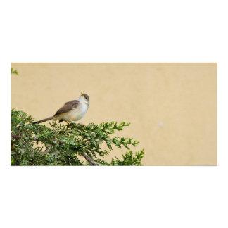 Sparrow Custom Photo Card