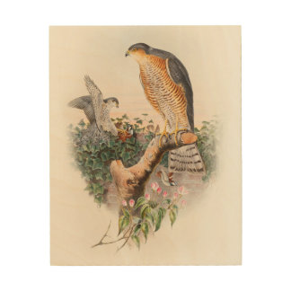 Sparrow Hawk John Gould Birds of Great Britain Wood Prints