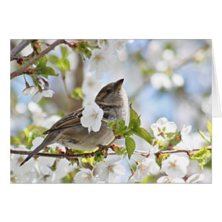 Sparrow in cherry blossoms card