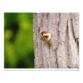 Sparrow In Oak Wildlife Photography Gifts & Tees 11 Cm X 14 Cm Invitation Card