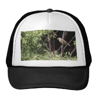 Sparrow In The Woods Hat