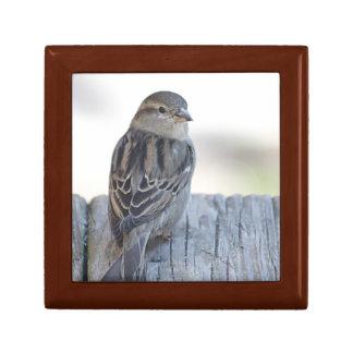 Sparrow photo small square gift box