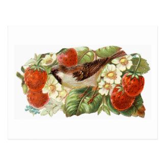 Sparrow & Red Strawberries - Vintage Illustration Postcard