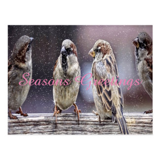 Sparrow seasons greeting postcard