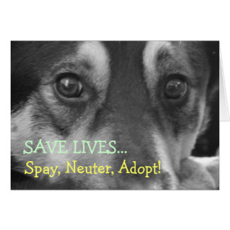 Spay Neuter Adopt Pet Dog Rescue Foster Card