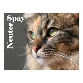 Spay / Neuter Postcard