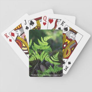 Species: Northern Oak Fern Playing Cards