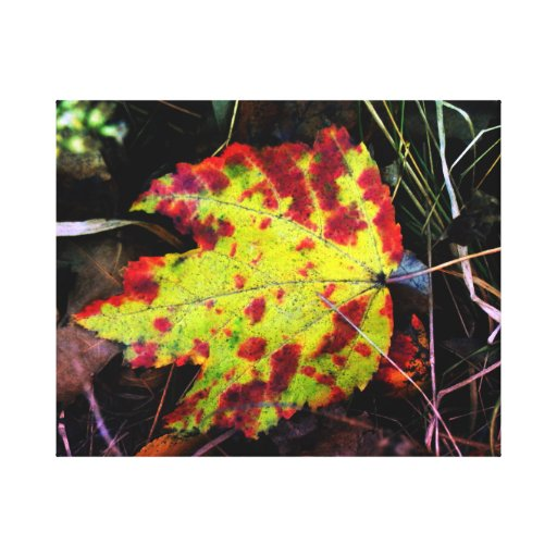 Speckled Autumn Leaf Stretched Canvas Print