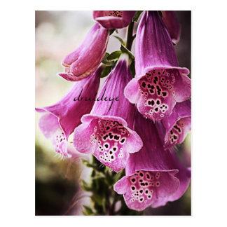 Speckled Bells Flower Postcard