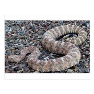Speckled Rattlesnake Postcard