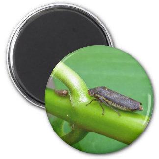 Speckled Sharpshooter Leaf Hopper Items 6 Cm Round Magnet