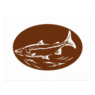 speckled spotted trout fish retro woodcut postcard