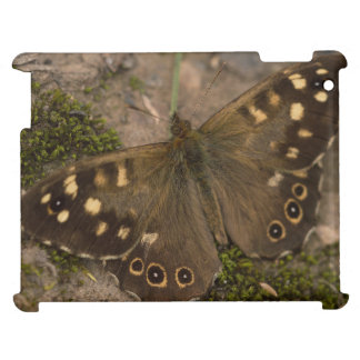 Speckled Wood Butterfly Case For The iPad 2 3 4