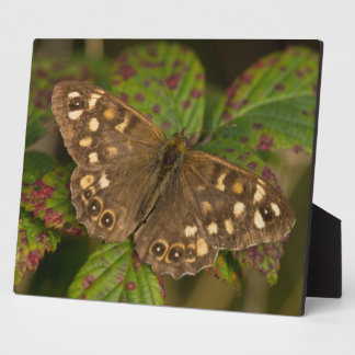 Speckled Wood Butterfly Photo Plaque