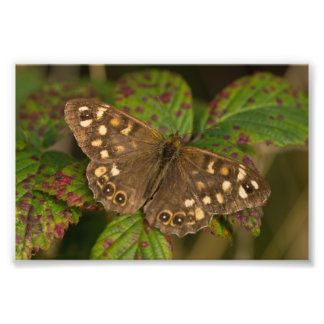 Speckled Wood Butterfly Photo Print